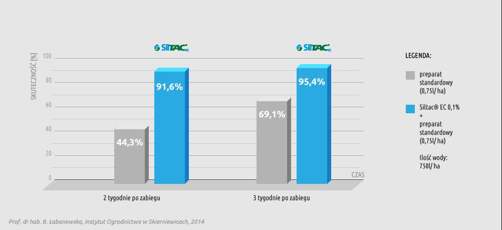 Wykres skuteczności preparatu Siltac EC w redukcji populacji miodówki gruszowej plamistej (Cacopsylla pyri) na gruszy