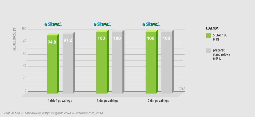 Wykres skuteczności preparatu Siltac EC w redukowaniu populacji mszycy brzoskwiniowej (Nectarosiphon persicae) na chryzantemie