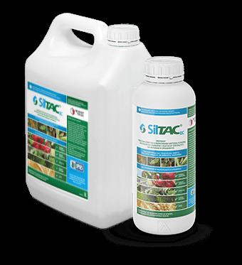 Siltac EC - zdjęcie produktu