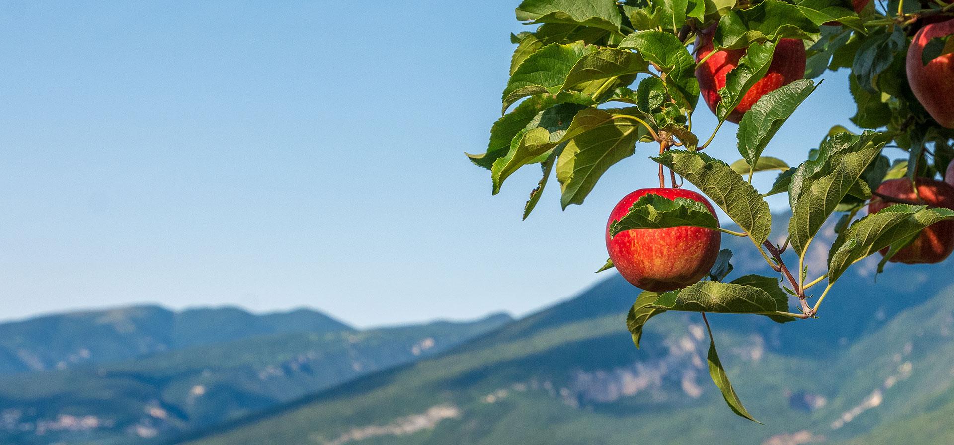 Ochrona roślin bez pestycydów